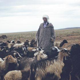 el aricha- troupeaux-réfugiés- juin 62
